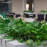 foliage indoor plant.jpg