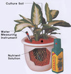 Seramis Planting System.jpg